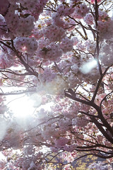 Mtfuji4 (Yesidster) Tags: japan travel nature contrast photography asia cherryblossoms mtfuji photo aov architecture design home urban