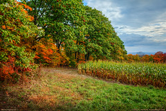 Autumn Corn Fields (Greg from Maine) Tags: autumn autumnseason fall fallseason seasons corn farming agriculture maine mainehighlands piscataquiscounty landscape rural hills trees sangerville sangervillemaine newengland field fieldcorn grain green pasture greenpasture