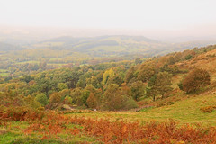 View from the top. Cleeve Hill (myraemery) Tags: cleeve hill gloucestershire highest point cotswolds autumn colours fog low cloud grass ferns trees sky walk climb view canoneos70d 1755mm