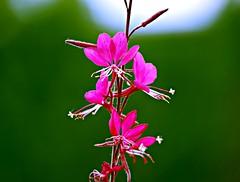 Feliz domingo-Happy sunday (portalealba) Tags: flores zaragoza zaragozaparque portalealba pentax pentaxk50 1001nights 1001nightsmagiccity 1001nightsmagicgarden