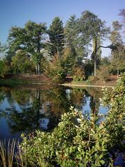 1356 (amansjeanphilippe) Tags: carlzeiss rollei sinar hy6 distagont450 fle amansjeanphilippe landescape paysage reflet autumn automne paris boisdeboulogne