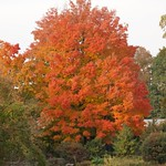 Autumn in Prospect Park Brooklyn Nov 1 2018 thumbnail