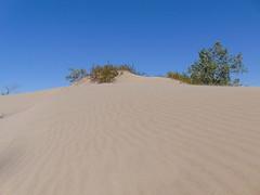 Sandbanks Dunes (4) (Quevillon) Tags: park sandbanksprovincialpark ontarioparks westlake athol sandbanksdunesbeach dunes canada ontario easternontario centreontario princeedwardcounty isleofquinte