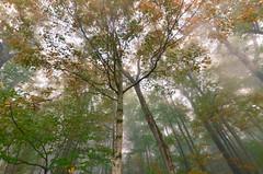 fall begins (brennapear) Tags: fall autumn leaves misty fog canada ontario