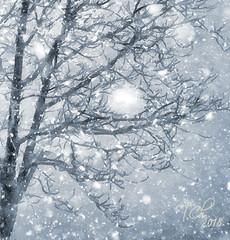 Дерево и снегопад. деталь / Tree and snow. detail (tatiana.ch) Tags: стилизация фотоживопись фото2009 фото2018 деревья пейзажгородской снег снегопад dap painting phototopainting ownphoto tree cityscape snowfall passepartout aquarell акварель