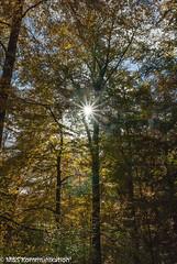 Herbstwald aufgenommen an der Edertalsperre - Autumn forest photographed at the Edertalsperre (klausmoseleit) Tags: photographie edertalsperre deutschland landschaft orte sonne hessen jahreszeit herbst nikond200 sigma1770mmf2840 wald herbstlandschaft msphotographie waldeck de