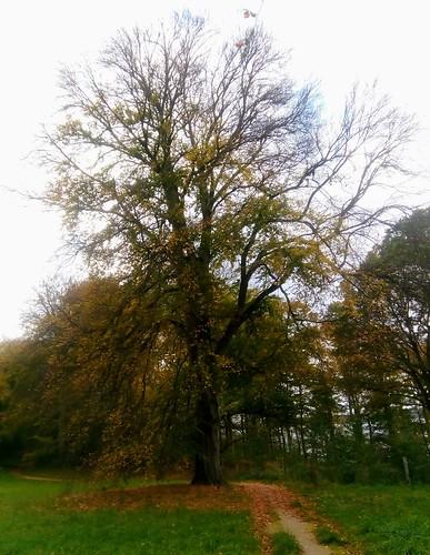Fredensborg Slot - oak