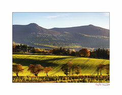 Winter Barley (The Terry Eve Archive) Tags: bennachie oxencraig craigshannoch backlit autumn aberdeenshire scotland