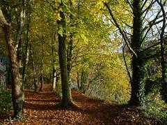 Mid autumn medley 3 (Phil Gayton) Tags: track trail path leaves tree foliage riverside walk river dart totnes devon uk