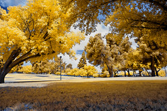 Heritage Park, Bakersfield California (Infrared Photography- False Colors) ​ (jc reyes) Tags: travels ir infrared infraredmaster digitalinfrared infraredimages infraredworld infraredphoto irfilter irphotography colorinfrared falsecolors invisiblelight creativeir creativeiramericas creativeireurope iginfrared photography infraredcamera infraredlandscape kolarivision jawdroppingshots epiccaptures igworld nikon nikonphotography nikkor bakersfield park california ​