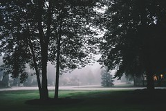 Misty mornings (mich.baker25) Tags: nature tree mist