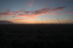 _DSC9492.jpg (thomasresch) Tags: sonneaufgang sun nordhaide panzerwiese nebel hartelholz sunrise sonne