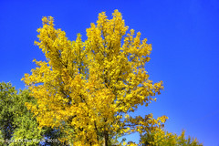 Autumn Has Fallen (jimgspokane) Tags: autumn fall trees otw today´sbest