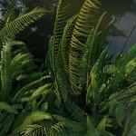 green fern jumble thumbnail