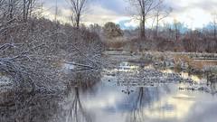 Snowy Creek (Steve InMichigan) Tags: creek snowycreek snow autumnsnow water landscape ricohautorikenon50mmf20 fotasym42eosmlensadapter
