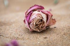 IMG_3484 (Zefrog) Tags: zefrog botanybay broadstairs uk margate kent beach sea