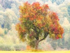 Herbstfarben (gerhmartin) Tags: natur baum herbst farben jahreszeiten