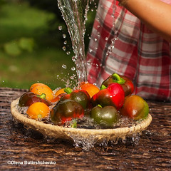 web-Peppers-and-tomatoes-are-washed (stok-1707) Tags: pepper crop water summer autumn bright red orange ripe juicy village garden outdoor