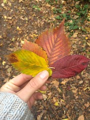 untitled (Binacat) Tags: iphone 5s digital color colorful autumn leaves herbst farbenfroh blätter park nature natur