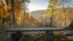 Bench view (Edas Imagery) Tags: bench trees woods forest autumn landscape