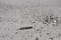 WhatTheWavesWashIn (PurpleZedCreations) Tags: beach grasses seagulls sand flags ice shell shells water fountain waterfountain feather bird birds grass landscape waves sky blue