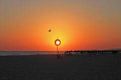 Por de sol disfarçado... (Zéza Lemos) Tags: portugal pordesol puestadelsol praia algarve areia água aves ave asas gaivotas boia vigilante vilamoura verão sunset sol sunny