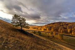 Осень #maksileni, #Максименко_Леонид, #Leonid_Maksimenko, #Landscapephotography, #своифото, #пейзаж, #природа, #утро, #рассвет, #дерево, #натура, #восход, #sunrise, #nature, #tree, #Landscape, #sun, #туман, #природа, #небо, #небоголубое, #сониальфа, #сони (ЛеонидМаксименко) Tags: bestofrussia uralinsta сониа6000 maksileni leonidmaksimenko foggy natgeoru nature небо природа натура дерево etonashural sun рассвет своифото sunrise natgeorussia сониальфа landscapephotography пейзаж восход sonyalpha небоголубое утро лучи sonya6000 tree landscape natgeoyourshot туман максименколеонид