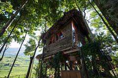 Maison dans les arbres 180 (Photoclub de Riedisheim) Tags: photo club photoclub riedisheim vietnam
