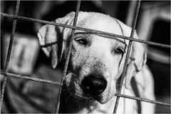 al rifugio Ohana (andaradagio) Tags: andaradagio bianconero bw canon dog cane miglioramicodelluomo nadiadagaro rifugioohana bandaa4zampeumbria
