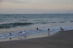 JLF16322 (jlfaurie) Tags: deauville normandie normandy france francia dqaniel mariefrance louisette mechas mpmdf jlfr jlfaurie pentax k5ii plage playa beach seaside mer mar sea