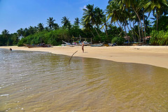 DSC_0476_3 (paaddor) Tags: beach beachscape beachphotography travel travelphotography travelattraction travellers travelingthroughtheworld srilanka exploresrilanka palms palmbeach singleperson