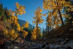 Creekside (Explore 11.14.18) (*wildbio*) Tags: canon sunstar fall autumn yellow creek explore trees backlit color washington pacificnorthwest daniellemunzing mountains