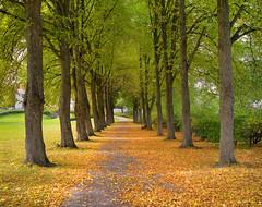 The beginning of autumn (Tim Ravenscroft) Tags: sweden sundbyholm trees autumn path hasselblad hasselbladx1d