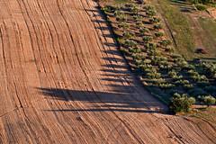 Ombre lunghe (luporosso) Tags: natura nature naturaleza naturalmente nikon nikonitalia nikond500 alberi albero trees tree ombra ombre shadow scorcio scorci campagna campi country countryside colline hills marche italia italy