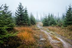 2018 Herbstregen im Nationalpark (jeho75) Tags: sony rx100m3 zeiss deutschlandgermany harz herbst fall autumn regen nebel rain fog landscape landschaft weg trail