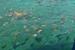 Peces (Evelio AD) Tags: sea ocean water blue azul deep agua animales naturaleza mar wild mex mx méxico
