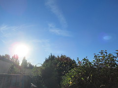 Monday, 24th, Sunshine IMG_6452 (tomylees) Tags: essex morning autumn september 2018 24th monday weather sky sunshine