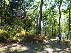 2018 Germany // Westerwaldwanderweg 3 // Klaus (maerzbecher-Deutschland zu Fuss) Tags: westerwaldwanderweg3 wanderweg wandern natur deutschland germany trail wanderwege maerzbecher hiking trekking weitwanderweg fernwanderweg westerwald ww deutschlandzufuss deutschlandzufus rheinlandpfalz ww3 2018 klaus