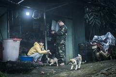 _DSC1194 (BisonAlex) Tags: 越南 vietnam sapa 沙壩 健行 trekking mountain rain could kid peoplelife dog market wood