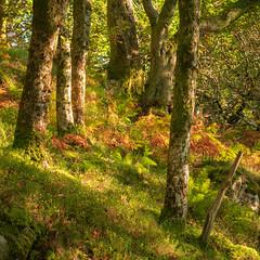 Colours (Photo Lab by Ross Farnham) Tags: wales dinorwig snowdonia landscape rossfarnham sony a7rii colours autumn shadows