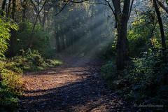Lighting the Path (John H Bowman) Tags: virginia richmond parks localparks jamesriverpark ponypasture woodlandpath sunrays november2016 november 2016 canon702004l explore