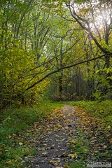 Follow the path (kentkirjonen) Tags: sony a7 a7iii mark3 ilce7m3 7m3 sweden sverige dalarna struktur structure cloud clouds sky himmel forest skog tree träd nature natur path stig autumn höst