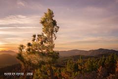 sunset tree (susodediego ) Tags: sunset pino arbol puestadesol picodelasnieves nikond750 nikkorafs1424mmf28ged susodediego thegalaxy nwn contactgroups