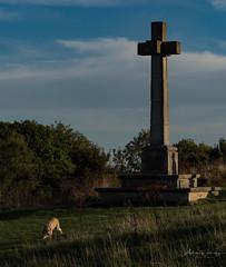 365-2018-267 - War Memorial (adriandwalmsley) Tags: shawforddown warmemorial