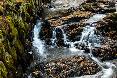 In the flow (langdon10) Tags: autumn countryside norway rotnes forest leaves stream