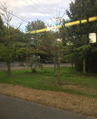2018 YIP Day 244: On the bus (knoopie) Tags: 2018 iphone picturemail september 2018yip project365 365project 2018365 yiipday244 day244