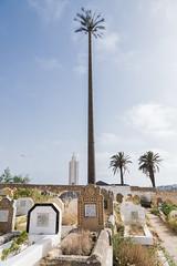 2018/07/06 17h51 cimétière de Salé 01 (Valéry Hugotte) Tags: 24105 maroc rabat salé canon canon5d canon5dmarkiv cimetière palmier tombe tombeau rabatsalékénitra ma