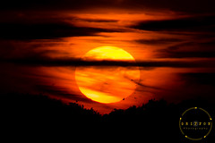Silhouette Sunset Crop (griffonphoto) Tags: 2017 birds cloud clouds england greatbritain outdoor outdoors outside silhouette sky summer sun sunset uk unitedkingdom burridge gb