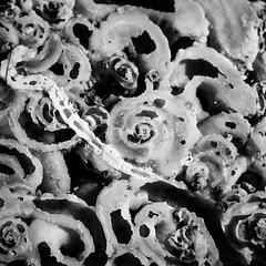 la nature est une artiste (mimu_13) Tags: bouchesdurhone europe france laciotat provencealpescotedazur blackandwhite macro noiretblanc square carré noirblanc plage galets rivage littoral