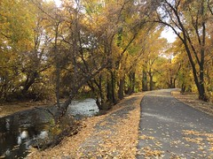 IMG_2805 (August Benjamin) Tags: provo provoriver provorivertrail fall utah mountains provocanyon fallcolors autumn trees leaves orem utahvalley jogging